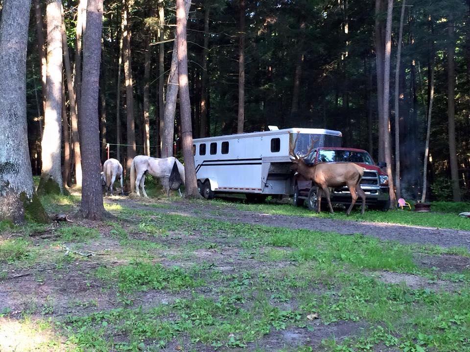 Big elk lick campground