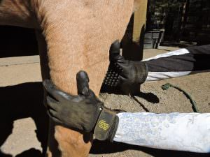 HandsOn Gloves  make grooming easy