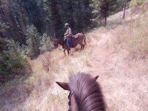 Keeping horse trails open