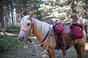 Camping Without a Pack Horse
