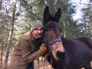 What to look for in a Trail Horse