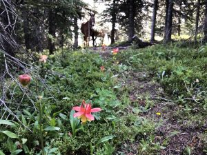 why horse camp