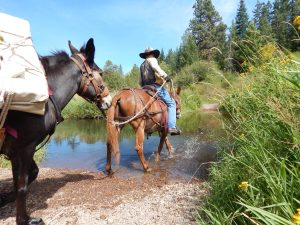 training a new mule
