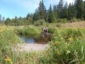 Water Crossing Training for Horses